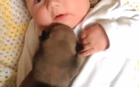Newborn puppy and baby enjoy a cuddle