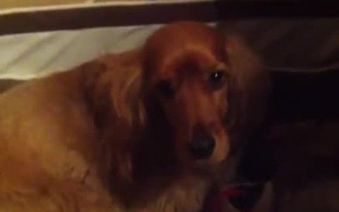Dogs sing along to their favorite song