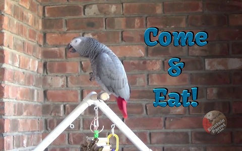 Einstein the Parrot hilariously encourages you to eat