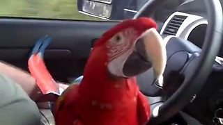 Talkative Parrot Starts A Hilarious Debate With Owners - Video