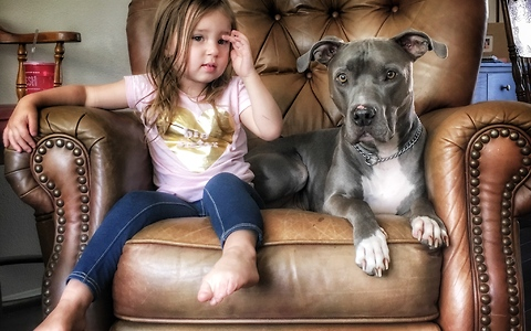 Little girl wakes up pit bull for playtime