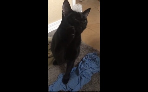 Kitten completely baffled by bubbles on his head