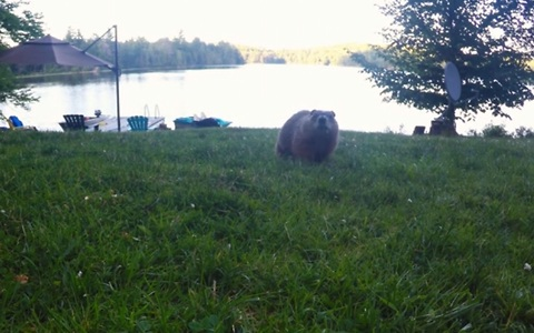Funny gopher realizes he's secretly being filmed