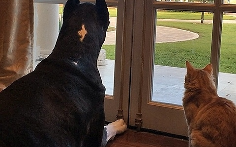 Dog and cat completely mesmerized by wild squirrel