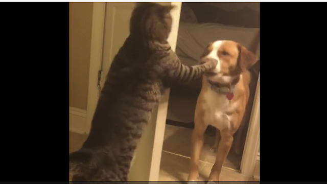 Cat slaps dog in the face, shuts door on him - Video
