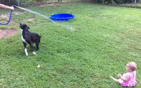 Baby can't stop laughing at dog chasing water hose