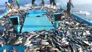 Fishing - Video
