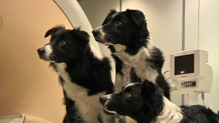 Dogs Understand Human Emotion, says Study - Video