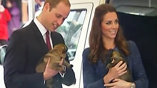 Royals Get Puppy Love Before New Zealand Trip Wraps Up - Video