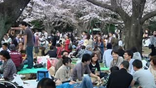 Tokyo Enjoys First Signs Of Spring Under Blooming Cherry Blossom Trees - Video