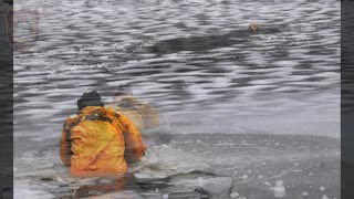 Dog Rescued from Charles River by Firefighters - Video