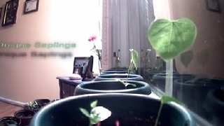Redbud Tree Growth Time Lapse