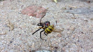 Black Widow vs. Yellow Jacket - Video
