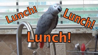 Einstein the Parrot chants for his lunch