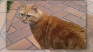 The cat is around on the mount, but when her owner cames back... - Video