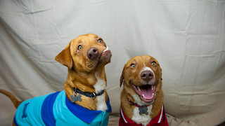 Picasso and Pablo at Luvable Dog Rescue - Video
