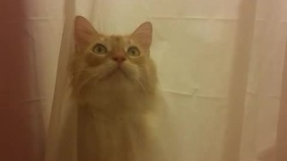 Cat rips through shower curtain for bath time - Video