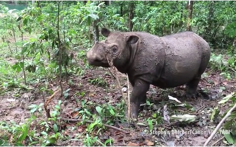 Rare rhino baby is only second of her kind born in 128 years