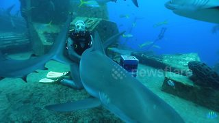 Diver gets bitten by massive shark during feeding frenzy - Video