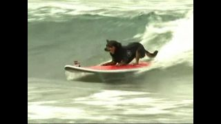 Dogs Go Surfing