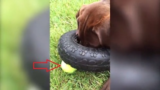 A dog struggles with simple problem solving skills. Can he overcome this challenge? - Video
