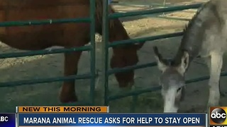 Marana Animal Rescue asking for help to stay open - Video