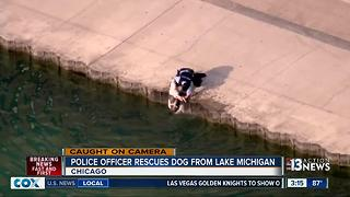 Police officer rescues dog from water in Chicago