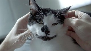 If Your Cat Makes These Six Things She Really Loves You - Video