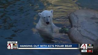 Hanging with Berlin the polar bear - Video