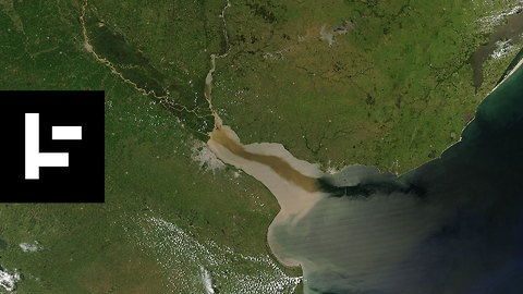 Coral Reef Discovered in the Amazon