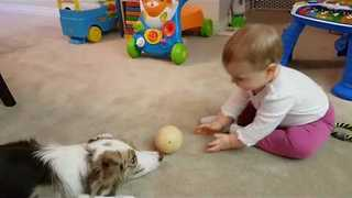 Cute Baby Plays Catch With Her Puppy Pal - Video