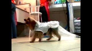 Brazilian Doggy Nuptuals - Video