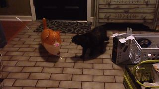 Balloon Cat Meets It's Match - Video