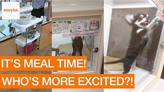 Chihuahuas in Pet Shop Are Very Excited For Dinner - Video