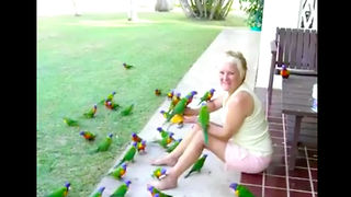A Woman is Having a Delighted Morning Surrounded With Beautiful Lorikeets - Video
