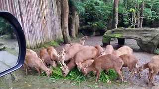 Take a Ride Through Taman Safari Park in Indonesia - Video