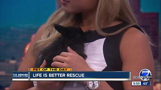 Pet of the day for June 11th - Video