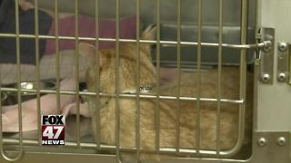 94 pets removed from home likely animal hoarding