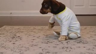Puppy's bedtime outfit will melt your heart