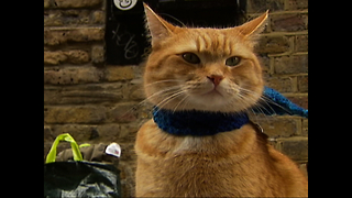 Bob The Busker Cat Heads For Hollywood