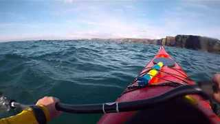 Kayakers Stumble Upon Basking Sharks in Kilkee - Video