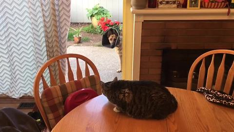 This dog and cat live together in peace, but something has happened that has this cat on edge...