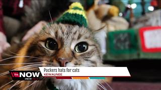 Kewaunee woman knits Packers hats for cats - Video