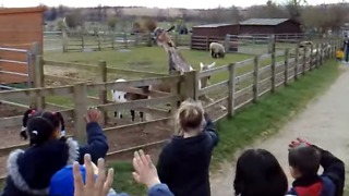 Talented Goat Waves Goodbye - Video