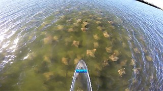 Huge school of stingrays surrounding transparent canoe - Video