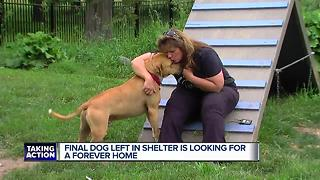 Final dog in shelter is looking for forever home - Video