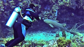 Affectionate nurse shark follows scuba diver like a lost puppy