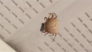 Close-up Footage of a Spider Eating a Fly - Video