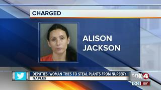 Woman Tries to Steal Plants From Nursery - Video