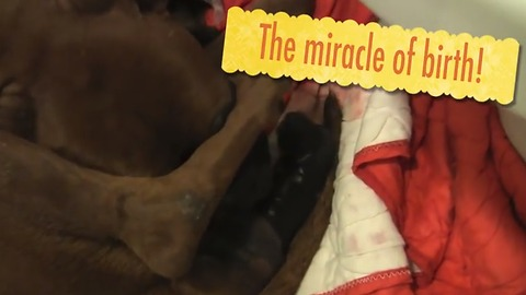 Abandoned Dog Gives Birth Hours After Rescued!